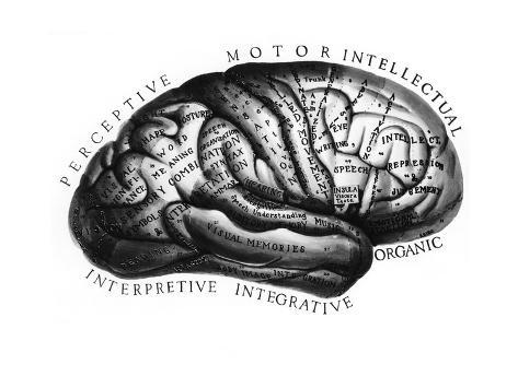 Diagram of brain functions impresso gicle por science source na diagram of brain functions impresso gicle ccuart Images