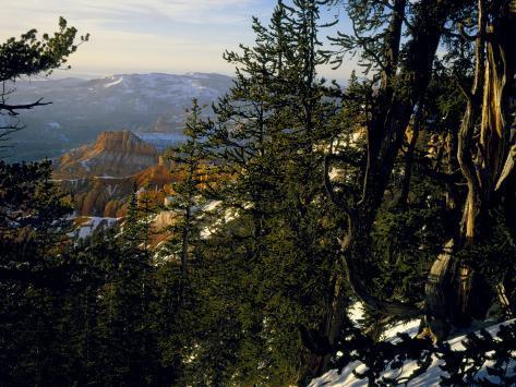 Bristlecone Pines Above Cedar Breaks at Sunset in Wintercedar Breaks National Monument, Utah, USA Photographic Print