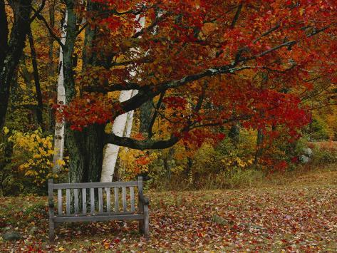 Empty Bench under Maple Tree, Twin Ponds Farm, West River Valley, Vermont, USA Photographic Print