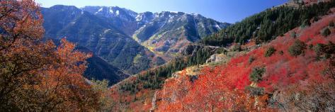 Maples on Slopes above Logan Canyon, Bear River Range, Wasatch-Cache National Forest, Utah, USA Photographic Print