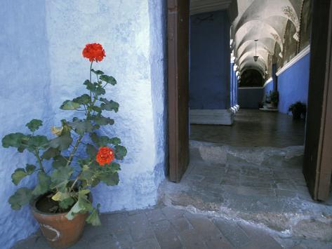 Potted Geranium at the Sprawling Santa Catalina Monastery Photographic Print