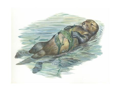 Sea Otter Enhydra Lutris Sleeping in Water, Illustration Stretched Canvas Print