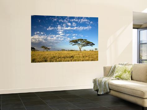 Acacia Trees under Blue Sky with Clouds Seinämaalaus