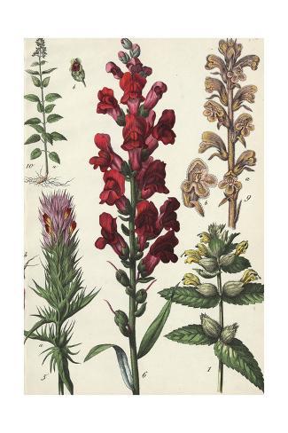 Segments of Tall, Flowering Stalks Art Print