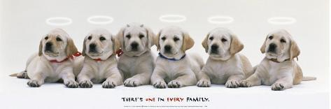 Every Family Art Print
