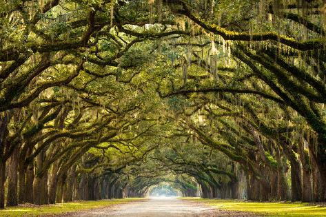 A Stunning Long Path Lined With Ancient Live Oak Trees D In Spanish Moss The Warm Late Af Photographic Print By Serge Skiba At Allposters