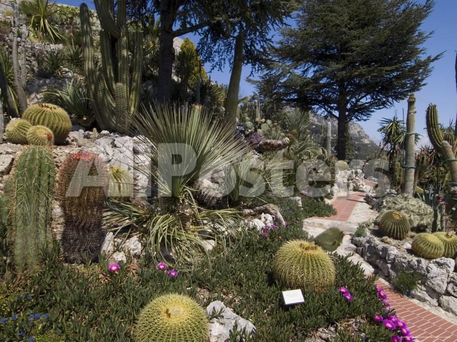 Botanic Garden (Jardin Exotique), Eze Village, Alpes Maritimes ...