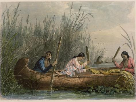 Gathering Wild Rice Giclee Print