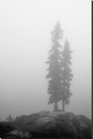 Two Trees on Mount Washington Stretched Canvas Print