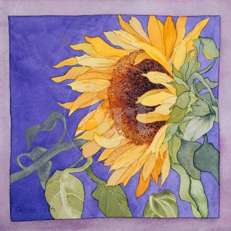 Sunflower I Premium Giclee Print by Sharon Pitts - AllPosters.ca