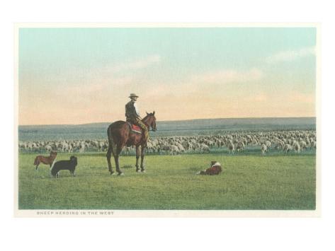 Sheep Herding in the West Art Print