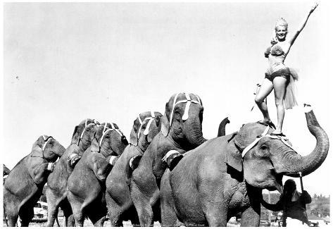 Shrine Circus Elephants Archival Photo Poster Poster