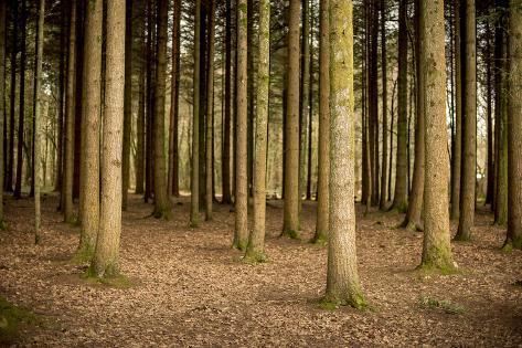 Parallel Lines Valokuvavedos