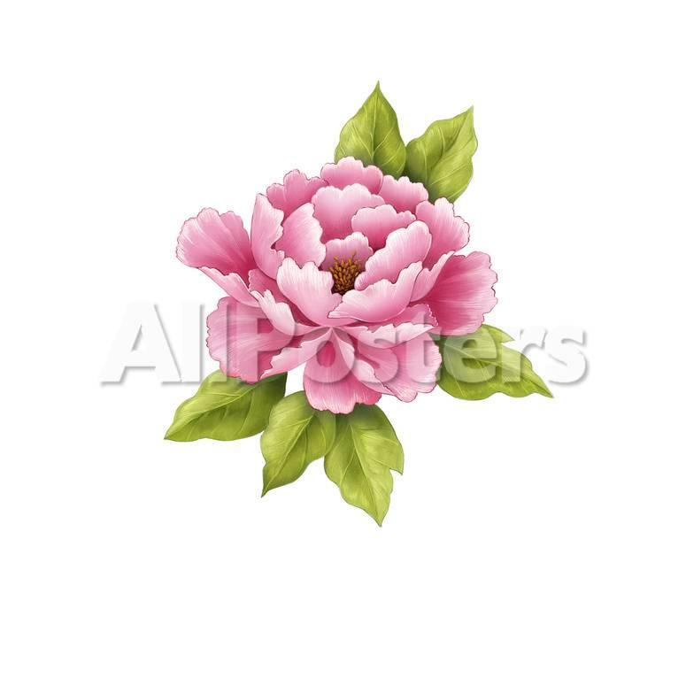 オールポスターズの single pink peony flower ポスター