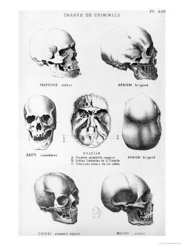 Skulls of Murderers, from L'Homme Criminel by Cesare Lombroso Impressão giclée