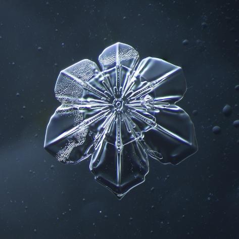Snowflake Giclée-vedos