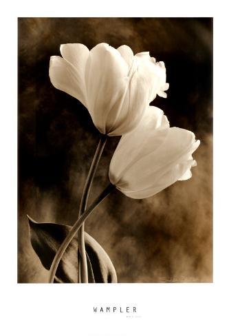 Bending Tulip Art Print