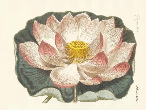 Splendid Flowers Stampa giclée