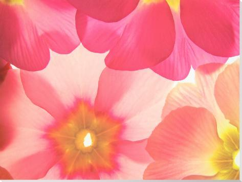 Spring Primful Stretched Canvas Print
