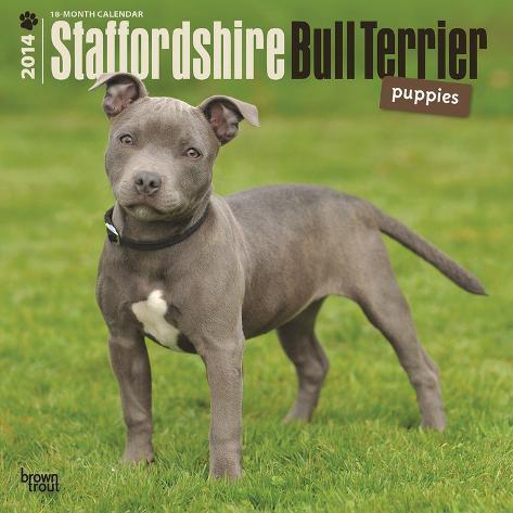Staffordshire Bull Terrier Puppies - 2014 Calendar Calendars