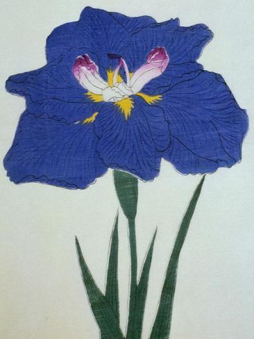O-Sho-Kun Book of a Blue Iris Giclee Print