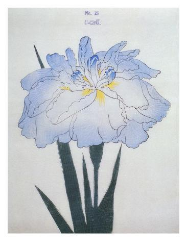U-Chu Book of a Light Blue Iris Giclee Print