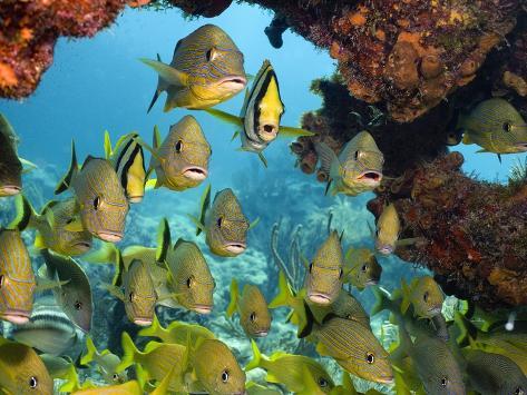 Schooling Fish Under Coral Ledge Photographic Print