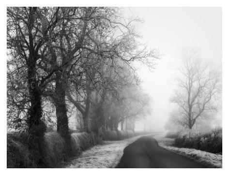 Misty Tree-Lined Road Art Print