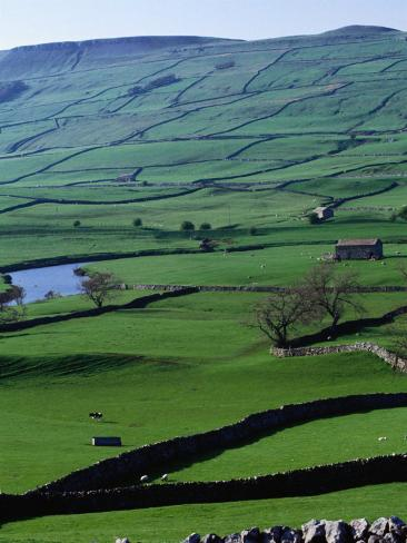 Green Dales and Traditional Stone Walls, England Photographic Print