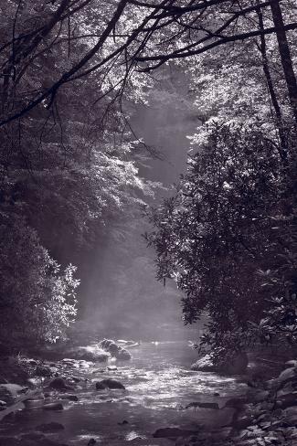 Stream Light BW Photographic Print
