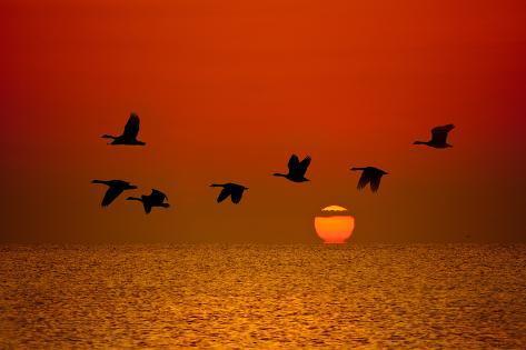 Sunrise Flight Photographic Print