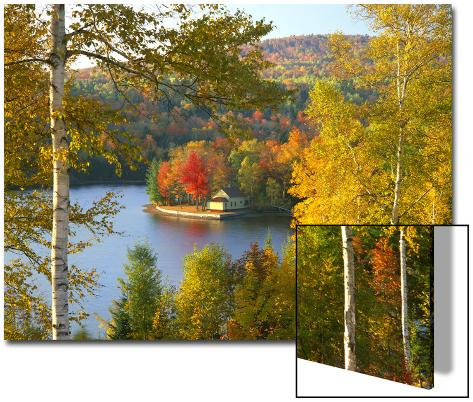 Summer Home Surrounded by Fall Colors, Wyman Lake, Maine, USA Art on Acrylic