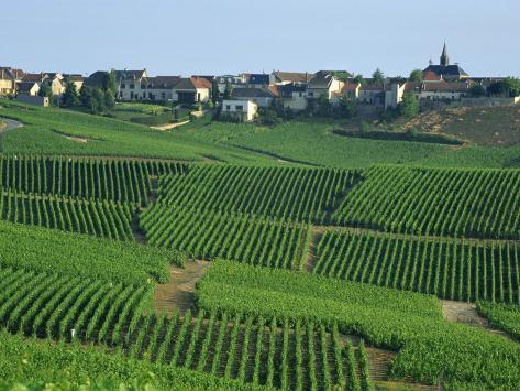 Marne champagne cramant village and vineyards france for Champagne marne