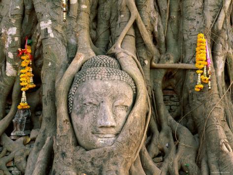 Wat Mahathat, Buddha Head, Ayutthaya, Thailand Photographic Print