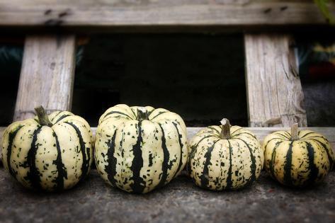 Row of Organic Pumpkins Photographic Print