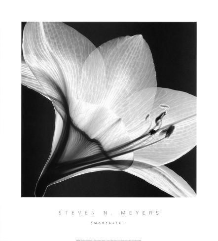 Amaryllis I Art Print