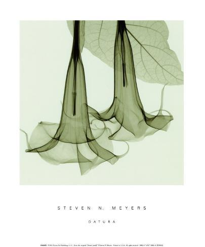 Datura sm. Art Print