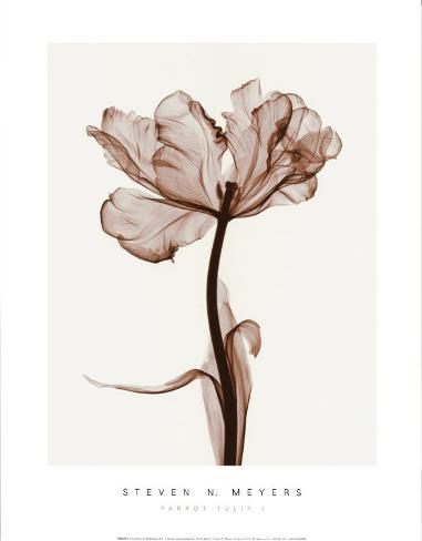 Parrot Tulips I Art Print