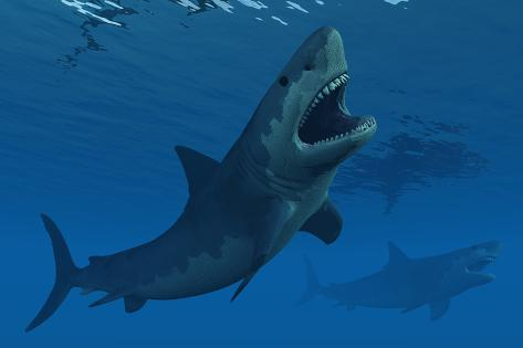 A giant megalodon shark during the cenozoic era of time poster by a giant megalodon shark during the cenozoic era of time altavistaventures Image collections