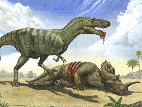 A Gorgosaurus Libratus Stands Over the Dead Body of a Centrosaurus Photographic Print