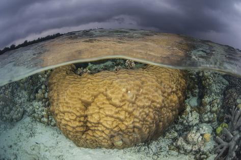 A Large Boulder Coral Colony Grows in Shallow Water in the Solomon Islands Photographic Print