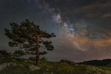 A Lone Tree on Top of a Mountain under the Stars and Milky Way, Crimea Photographic Print