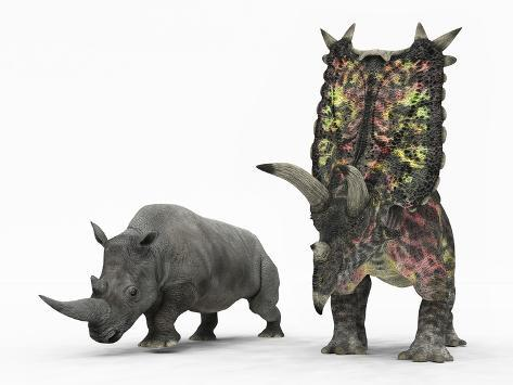 An Adult Pentaceratops Compared to a Modern Adult White Rhinoceros Photographic Print