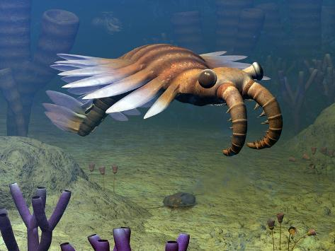 An Anomalocaris Explores a Middle Cambrian Age Ocean Floor Photographic Print