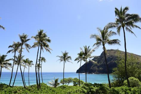 Palm Trees Along the Coast of Waimanalo Bay, Oahu, Hawaii Photographic Print