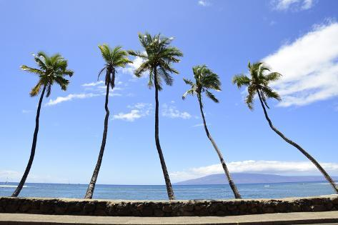 Palm Trees Jut Out over the Water Maui, Hawaii Photographic Print