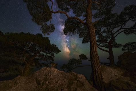 The Milky Way Shining Through the Trees on the Coast of the Black Sea Photographic Print