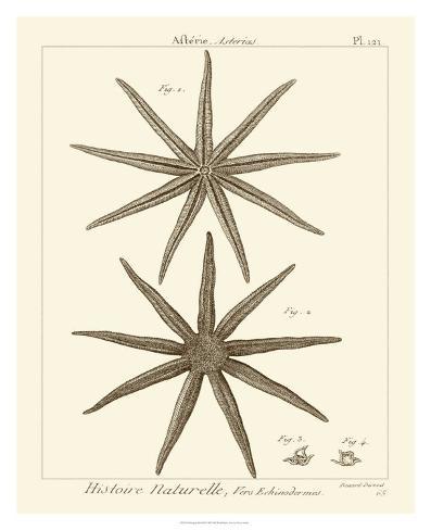 Striking Starfish III Giclee Print