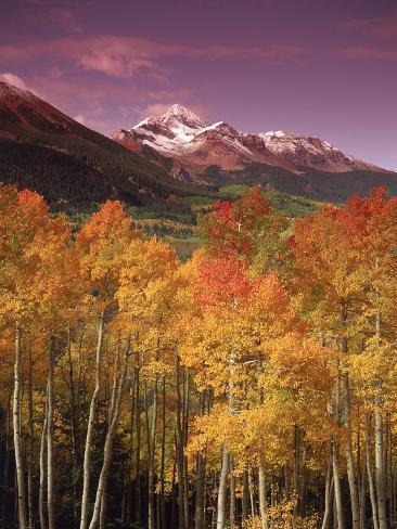 Autumn Aspen Colors, Mt. Wilson, San Juan Nf, CO Photographic Print