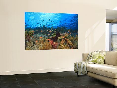 Schooling Anthias Fish, Wetar Island, Banda Sea, Indonesia Wall Mural